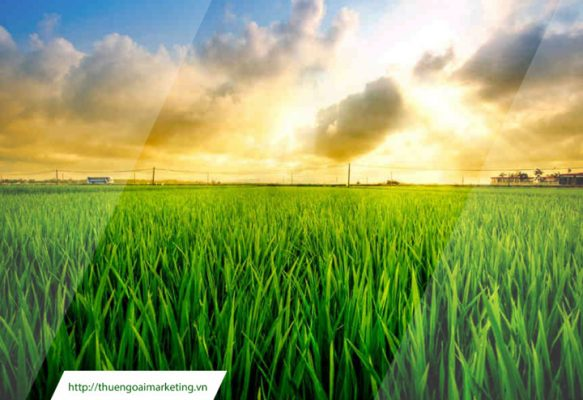 chiến lược marketing ngành nông nghiệp